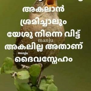 411333_1561027769.jpg