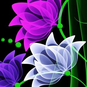 510639_1562910859.jpg