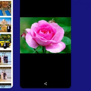 512950_1583766793.jpg